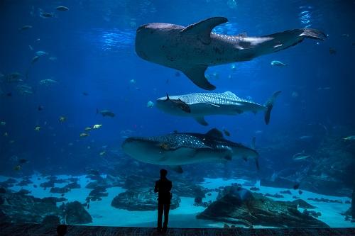 habitation avec un aquarium