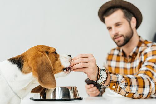 Bonnes croquettes pour chien